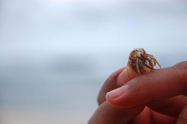 Hermit Crab in Sabtang Island