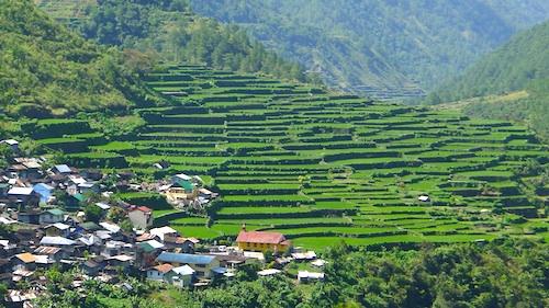 Bay-yo Rice Terraces in Bontoc