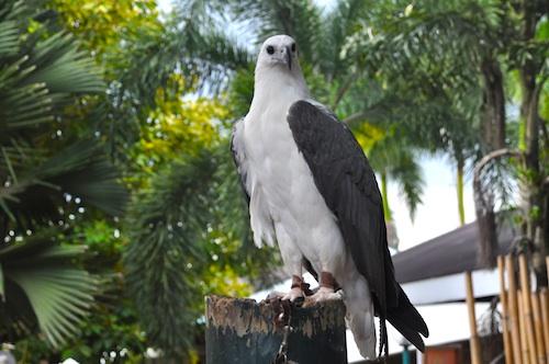 Birds at Davao Crocodile Park