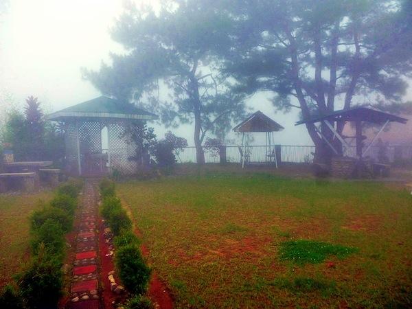 Foggy Morning at the Garden