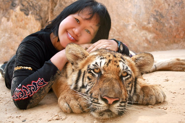 Napping with tiger in Thailand