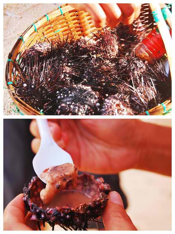 Sea Urchin Anyone?