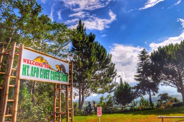 Mount Apo Civet Coffee Farm