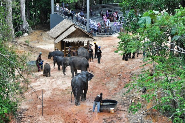 Seven Elephants at Kenyir Elephant Village