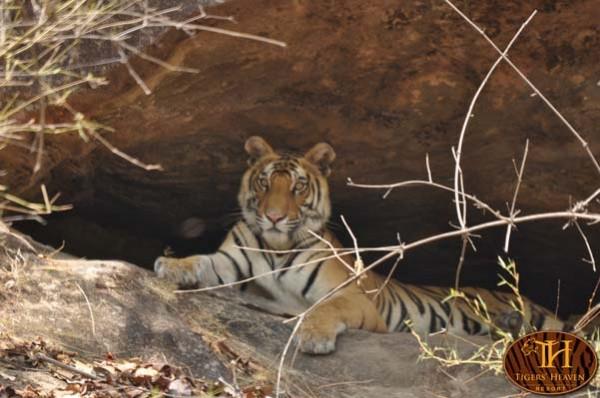 Inside Tigers Heaven Resort