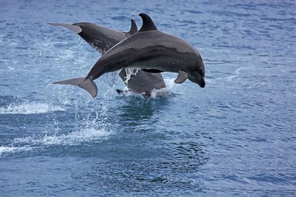 Dolphin Watching in Puerto Princesa Palawan