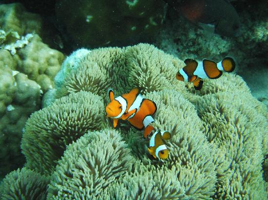 Snorkeling in Coron