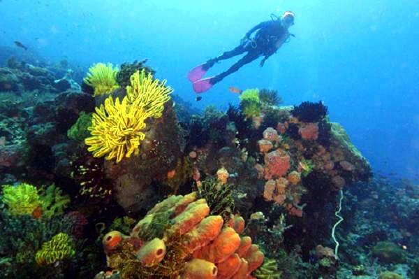 Tubbataha Reef National Marine Park photo by ati.da.gov.ph Best Island