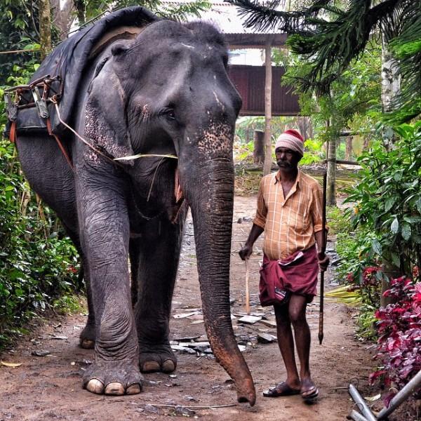 Tusker Trail in Thekkady Kerala