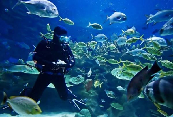 Diving in Camiguin by CamiguinIsland.net