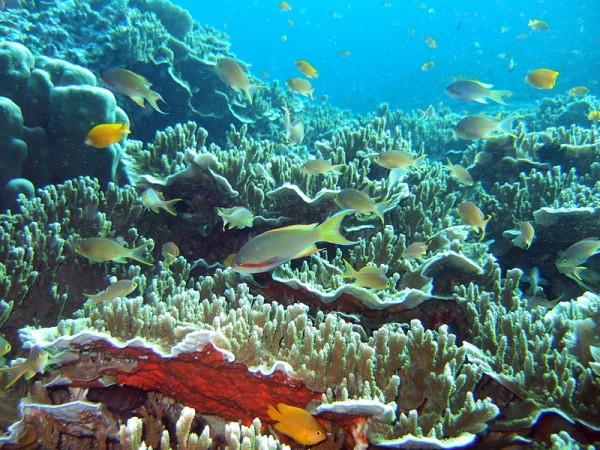 Diving in Moalboal Cebu