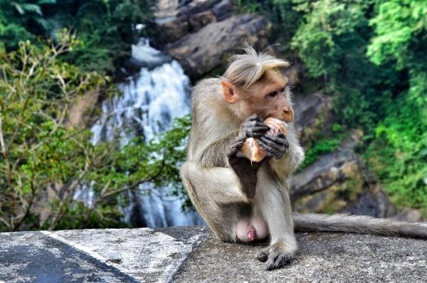 Monkey at Valara Waterfalls
