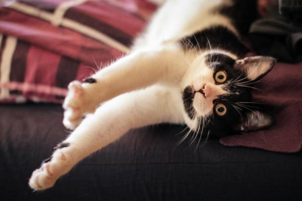 Ramdon Cat Photo