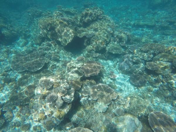 Apo Reef Natural Park Coral Reef