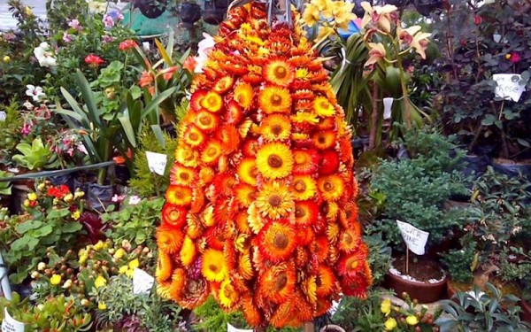 Experience Panagbenga Festival once a year