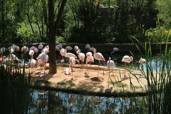 Flamingos inside Lost Valley