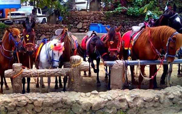 The horses at Wright Park
