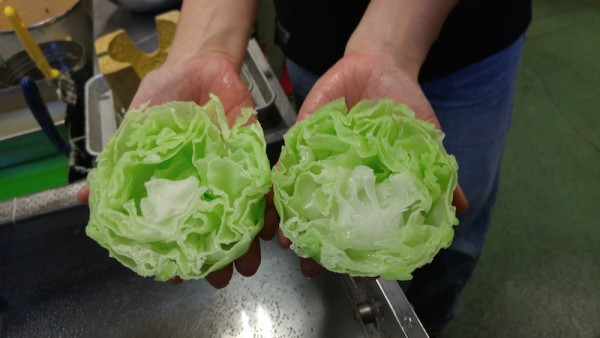 After cutting the fake lettuce in half