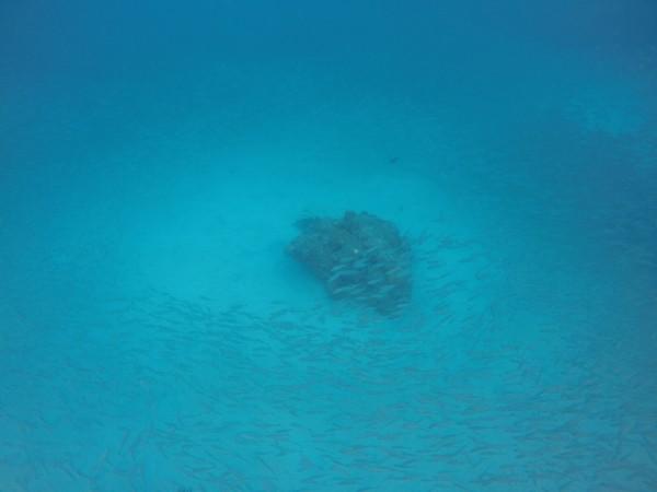amazing underwater view