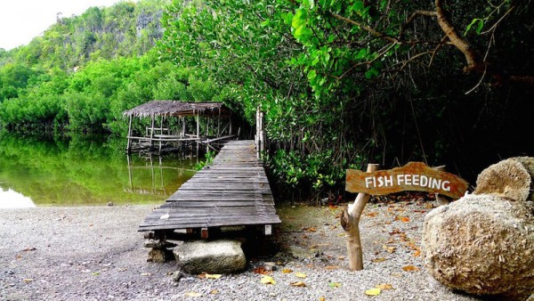 Fish Feeding at the natural lagoon