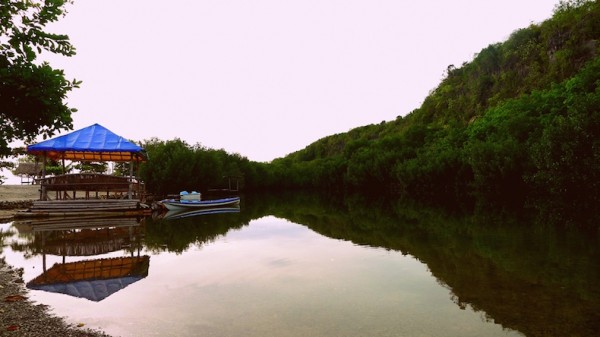 Natural lagoon teeming with mangroves