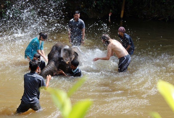 Elephants love the water and are very good swimmers, their trunks make a very good natural snorkel.