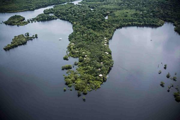 Flooded Brazilian Amazon Jungle