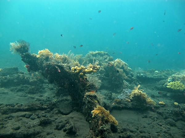 Diving around Amed Bali