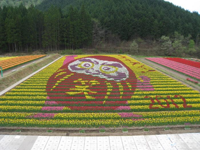 Tanto Tulip Festival near Kinosaki Onsen