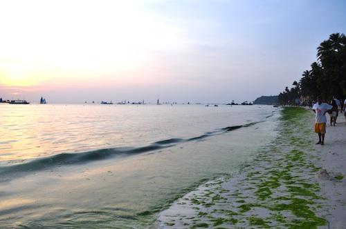 Green Algae in Boracay