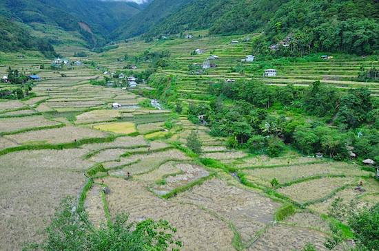 Hapao Rice Terraces