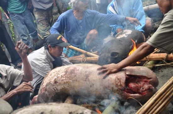 Roasting of Pig