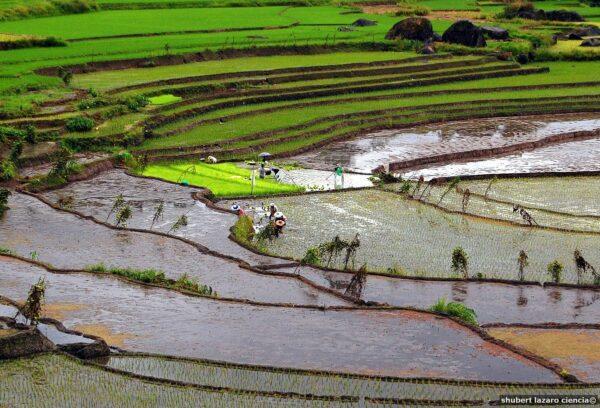 Nagacadan Rice Terraces by Shubert Ciencia via Wikipedia Commons