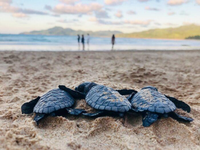 Turtles at Duli Beach, Palawan, El Nido by David Reynolds via Unsplash