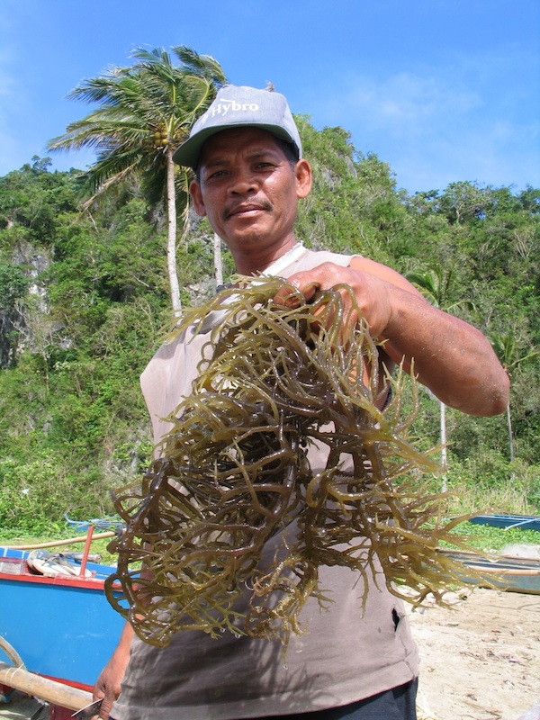 Seaweed Farmer in Caramoan