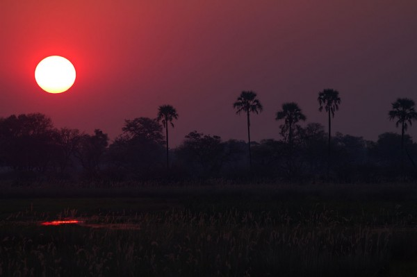 Sunset in the Okavango