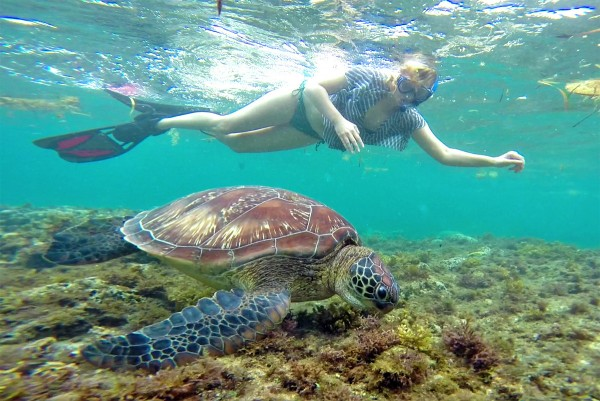 Sabrina Swimming with Turtles in Apo Island