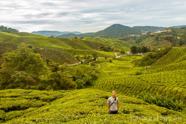 Tea plantations in the Cameron Highlands,Malaysia