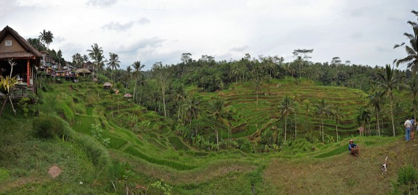 Tegalalang Rice Terraces in Ubud Bali
