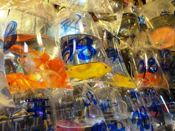 MongKok Goldfish Market by Fabio Achilli via Flickr