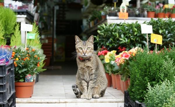 Mongkok Flower Market by Toivo via Flickr