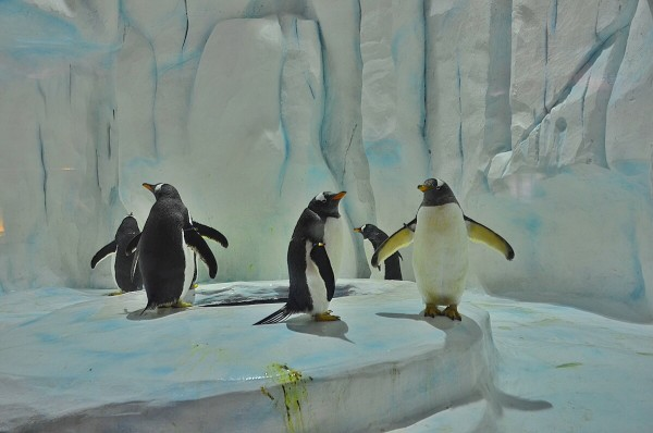 Ocean Park Polar Adventure