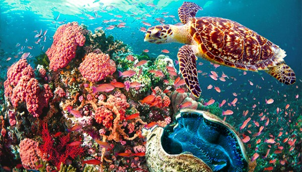 Coral Garden in Puerto Galera photo by Coral Garden Beach Resort