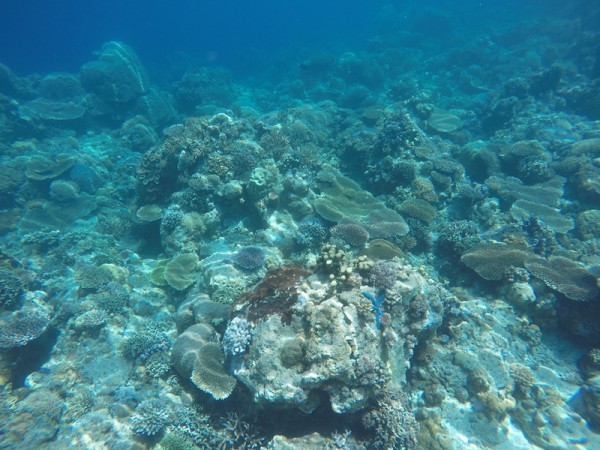 Apo Reef Marine Kingdom