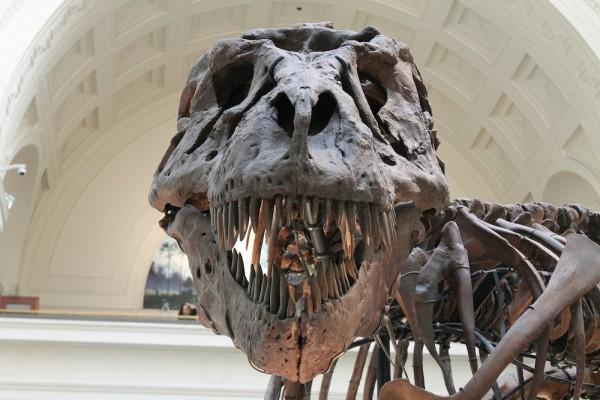 Tyrannosaurus - Canadian Heritage Sites