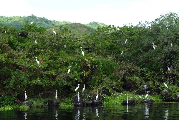 Taal Volcano Island is now a Bird Watching Site and a Bird Sanctuary