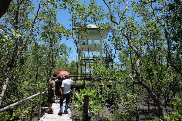Silonay Mangrove Conservation Area Viewdeck