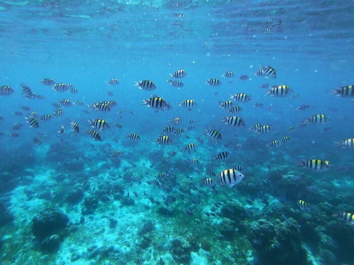 Snorkeling in Olango Island photo by @olgatsai via Unsplash