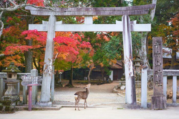 Nara, Japan photo by @magict1911