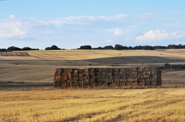 The landscape sometimes turned golden with the newly-harvested stalks of wheat.